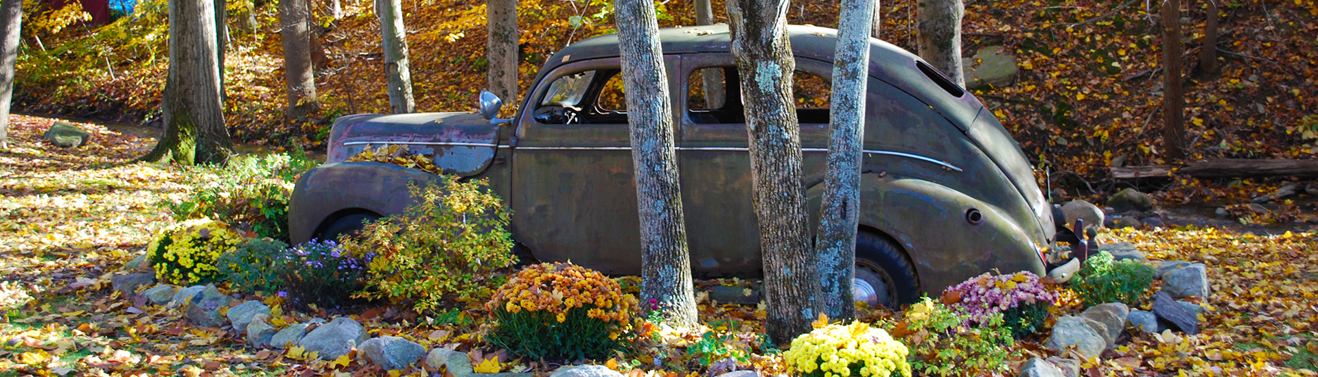 An old rusty car sitting in a flower garden, strewn with autumn leaves.